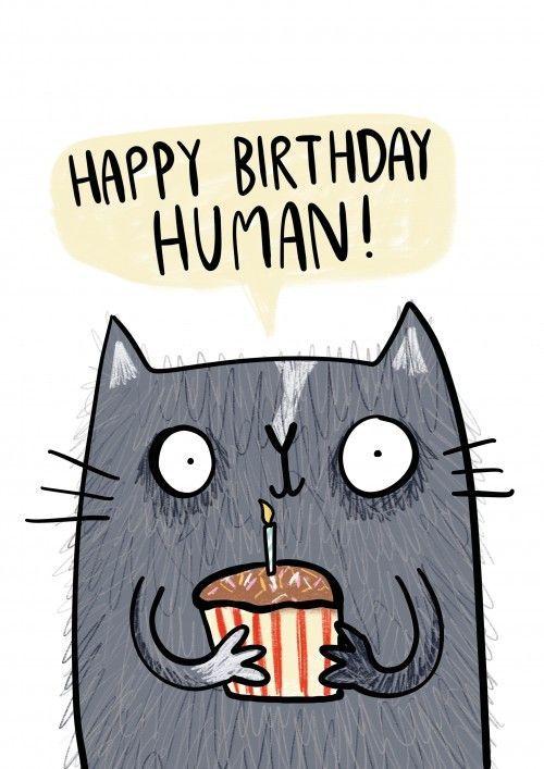 cat birthday card video